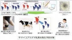 本学大学院獣医学研究科4年 藤本悠理さんの論文が国際誌に掲載―牛マイコプラズマ乳房炎の重要リスク要因を疫学的に解明―