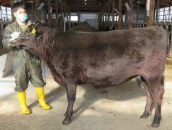 フィールド教育研究センター肉畜生産ステーション肉牛農場の基本登録結果について