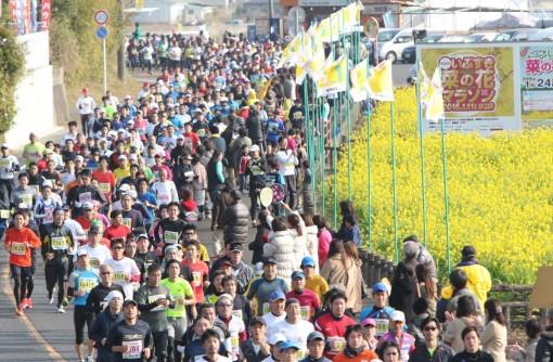 「いぶすき菜の花マラソン」のススメ