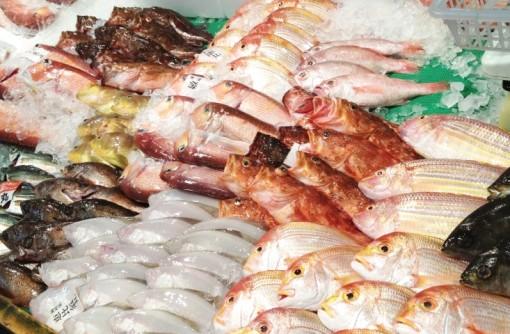 福岡のおいしい魚の秘密を探ろう