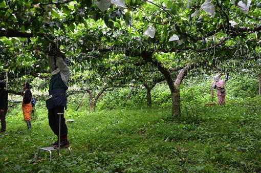 【締切:8月16日】山の中の果樹園でいい汗をかいて、温泉で疲れを癒す贅沢な日々を体験しませんか?