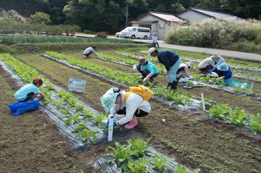 湯涌で1泊2日の農業体験ツアー開催!