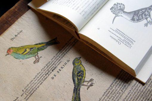 「文字を書くこと本を読むことは誰もが手のひらの上で楽しめる小さな喜び」