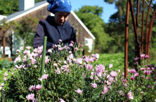 【山形】菊の花びら食う季節