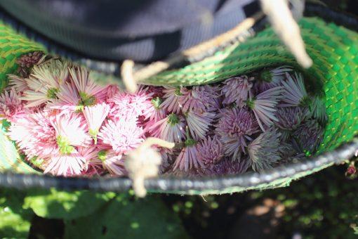 菊の花びら食う季節