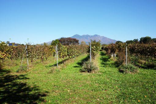 「ワインは、もっとも自然なアルコール飲料で、日常的であり、芸術的であり、もっとも生育環境(テロワール)が影響する飲み物です」