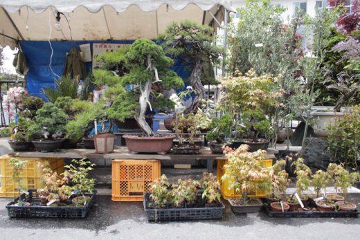 はじめての「薬師祭 植木市」