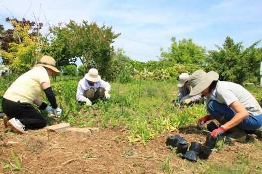 「差別のない世界」をつくるハーブ農園。