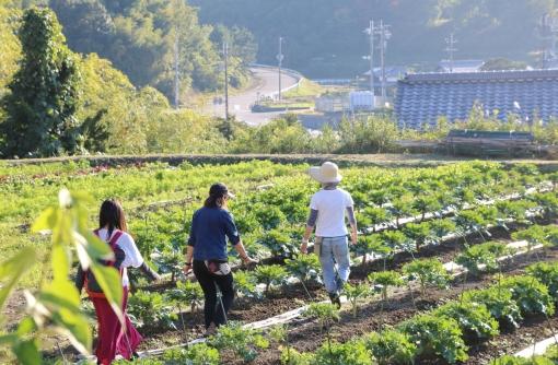 神戸で農家になる