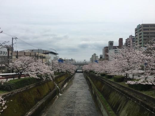 【エリアガイド】二宮エリア(二宮町・琴ノ緒町)
