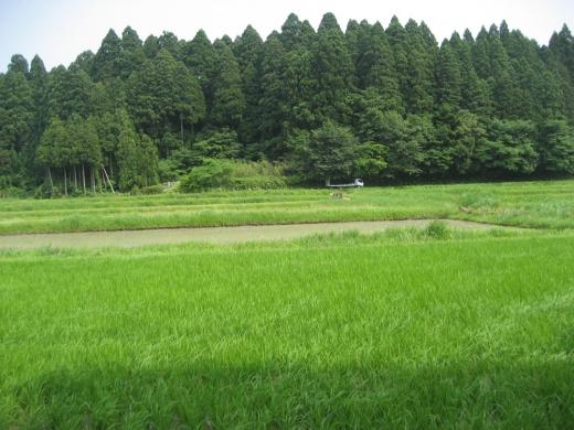 """5/19(土)@東京「""""農"""" """"漁""""自然と触れる暮らしセミナー」"""