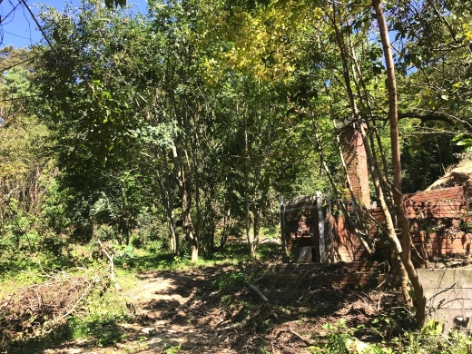 ニュータウンの茅葺き景観を守る活動がはじまります!ワークショップ「茅葺き屋根を葺き替え、木の下でごはんを食べよう!」の参加者募集。