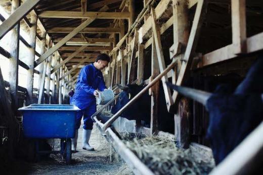山形牛を大切に育てる仕事/蔵王ファーム