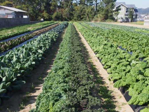 農業を通じて人がふれあう場所づくりを。