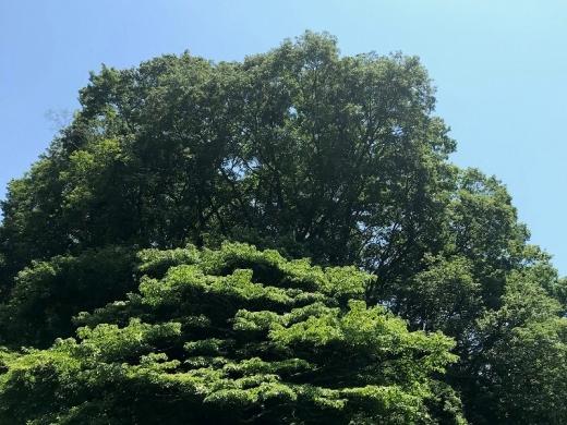 住宅地に囲まれたサンクチュアリ「広町の森」