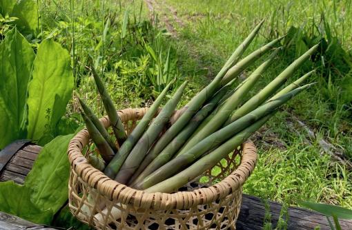 食彩やまがた12カ月 水無月 「月山竹」