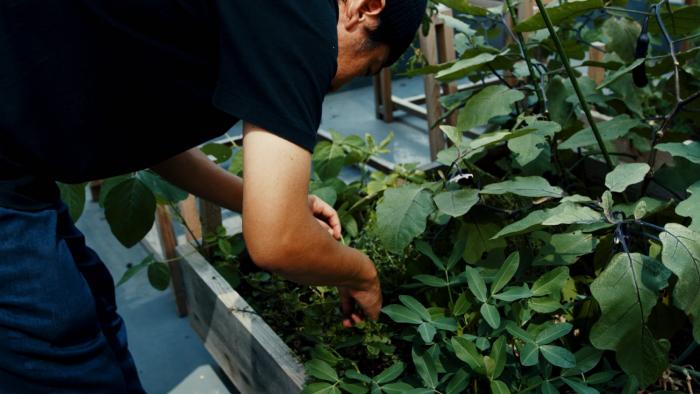 [参加者募集] まちの中で野菜を育てる。神戸のアーバンファームツアーを開催します。