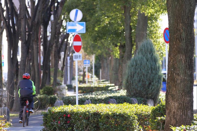 自分たちのまちの風景をつくる街路樹再生プロジェクト