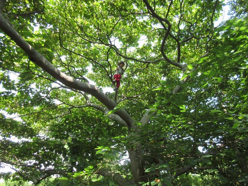 自然の中で育つ。鎌倉市内の青空自主保育「でんでんむし」を取材