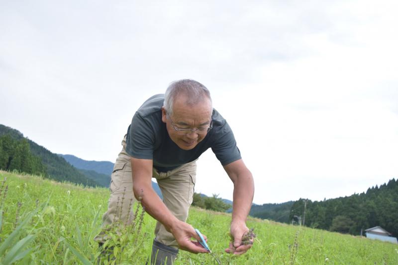 【福井県池田町】ホーリーバジルが紡いだ人の縁/杉茂樹さん