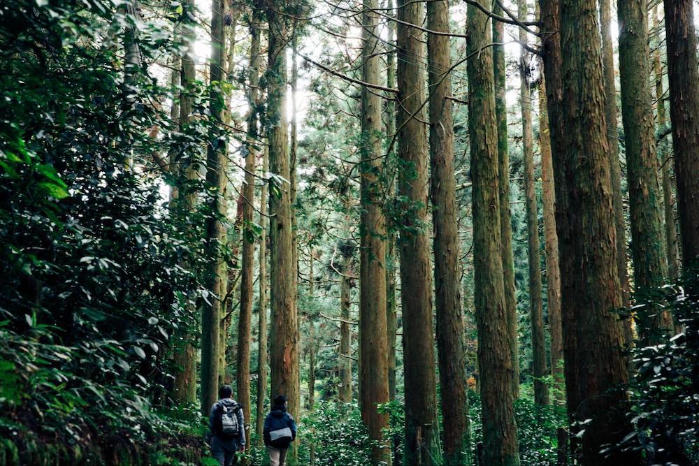 【神戸】10/9イベント  LEARN FROM NATURE [森林] 六甲山の森林を育てるための、心地よい関わり方