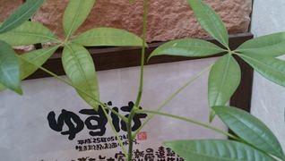 ケア柚の葉