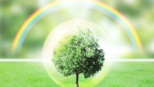 ぶどうの木
