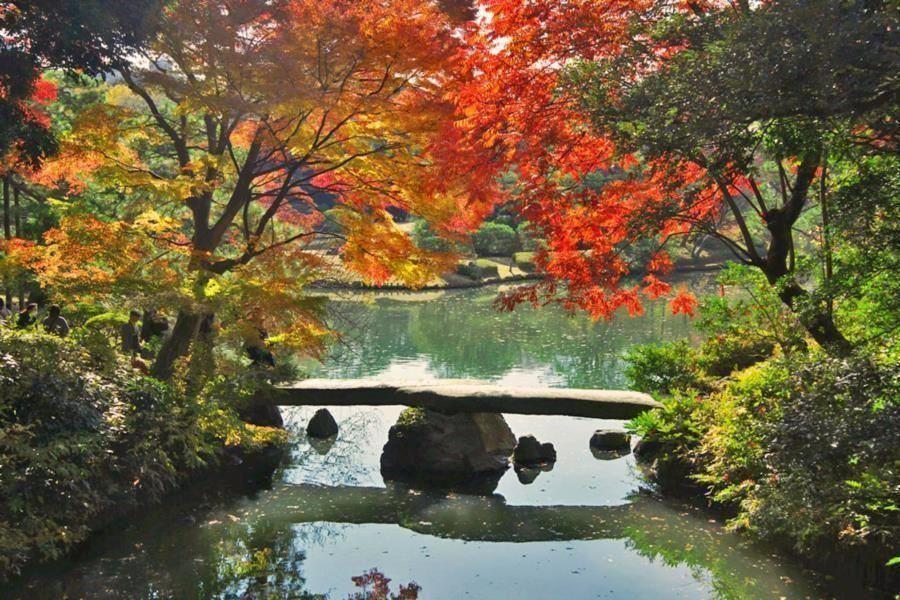 rikugien garden - Japanese Garden Cherry Blossom Paintings