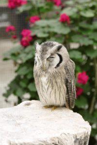 掛川花鳥園で花と鳥とのふれ合いを体験!その魅力を紹介