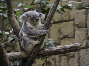 動物は約500種で日本一!東山動植物園の見所を紹介