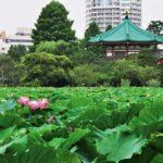 東京都内で子供が楽しめるおすすめの公園5選