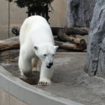 旭山動物園で動物の自然な姿が見られる!おすすめエリアを紹介