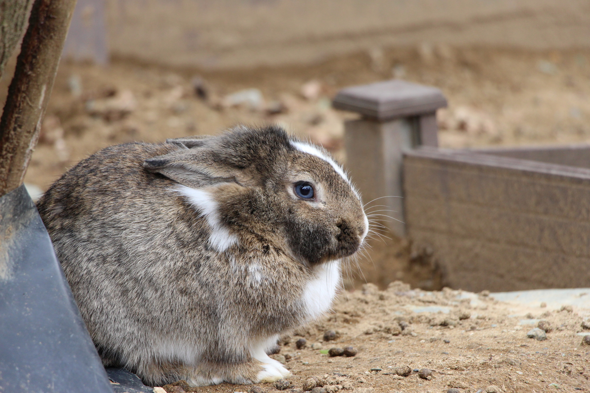 たくさんの種類のうさぎがいる/月うさぎの里(石川県/加賀市)