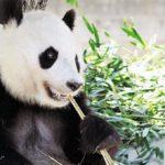 神戸市立王子動物園はパンダとコアラに会える日本唯一の場所!