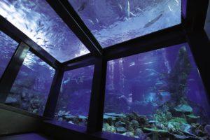 関西で家族におすすめの水族館5選