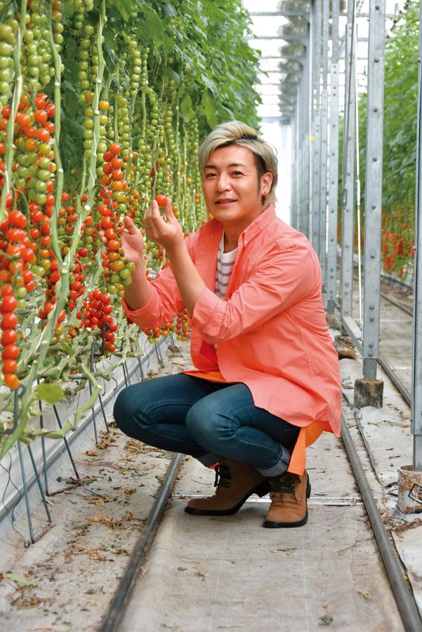ハウス内の様子/井出トマト農園(神奈川県/藤沢市)