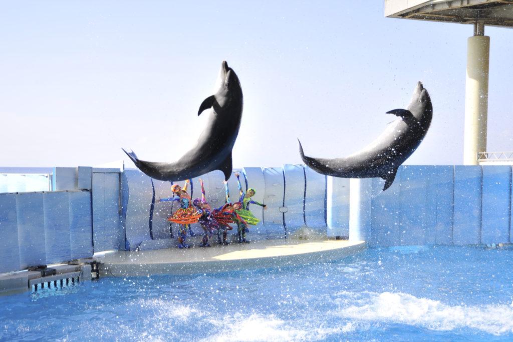 イルカ・アシカショー「きずな/kizuna」/新江ノ島水族館(神奈川県/藤沢市)