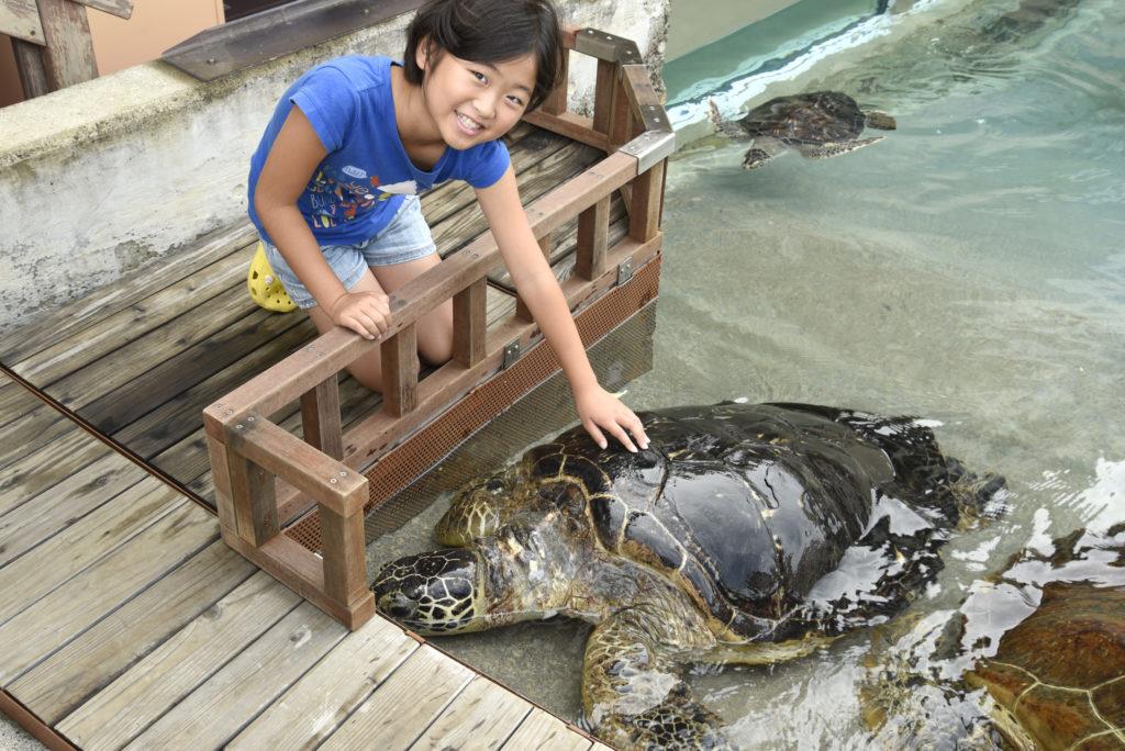 ウミガメとふれあう様子/新江ノ島水族館(神奈川県/藤沢市)