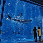 のとじま水族館の魅力を紹介!美しい海の中の世界を満喫する