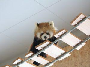冬でも雨でも動物ウォッチングが楽しめる札幌市円山動物園