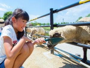 ハーベストの丘の楽しみ方を紹介!動物とのふれ合いや体験教室