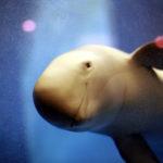 瀬戸内の海と生きものが丸わかり!宮島水族館