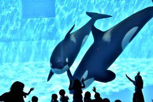 名古屋港水族館の見所を紹介!世界の海の生き物に出会える楽しい水族館