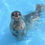 イルカやトドのパフォーマンスが人気!北海道最大級の「おたる水族館」の魅力