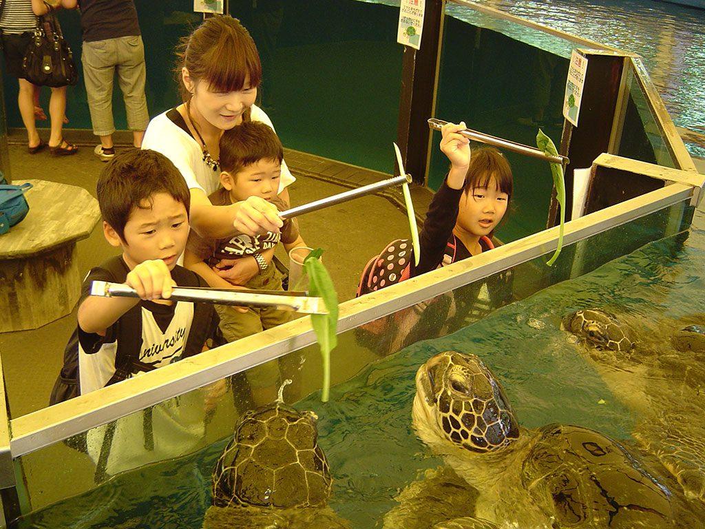 ウミガメにトングでエサをあげる子どもたち/越前松島水族館(福井県坂井市)