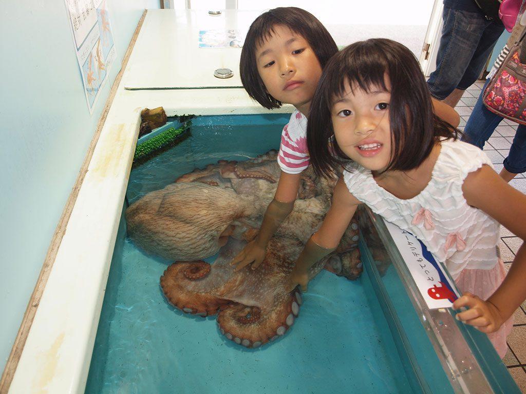 特大のミズダコの頭や吸盤にさわる子どもたち/越前松島水族館(福井県坂井市)