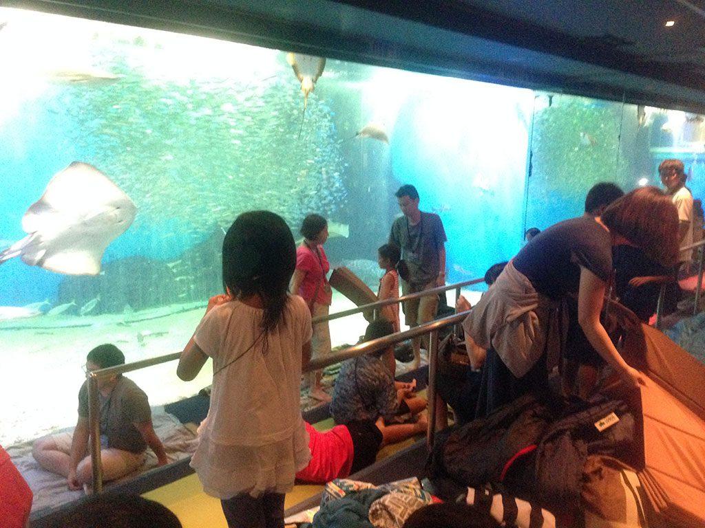 水槽の前で寝る準備をする親子たち/越前松島水族館(福井県坂井市)