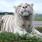 岩手サファリパークは、動物のエサやり、ゾウに乗る体験など魅力いっぱい!