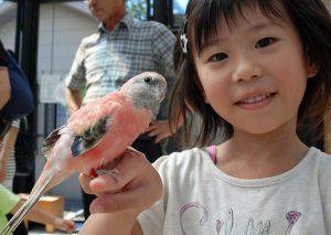 希少なコビトカバやホワイトタイガーも!いしかわ動物園(石川県)で楽しく学ぼう