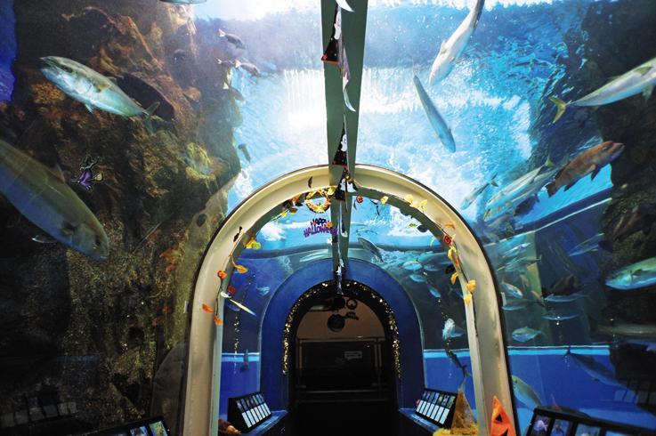 富山湾大水槽のトンネル/魚津水族館(富山県魚津市)